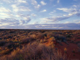 Vast Sky and Spinifex Grass Desert Habitat at Sunset, Australia Photographic Print by Jason Edwards