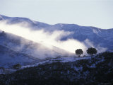Snow Covered Santa Ynez Mountains and Backlit Oak Trees, California Photographic Print by Rich Reid