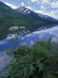 Summit Lake, Cow Parsnip, Lake and Mountains, Alaska Photographic Print by Rich Reid