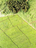 Tea Plantations Grow at the Border of the Mount Kenya Forest Reserve Photographic Print by Michael Fay