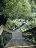 Stairwell and Aerial Walkway Overlooking Cool Temperate Rainforest, Australia Photographic Print by Jason Edwards