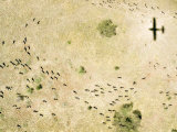 Wildebeest Disperse over the Serengeti as the Plane Flys Over, Tanzania Photographic PrintMichael Fay