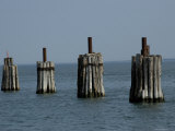 Wooden Pilings at a Ferry Dock Photographic Print by Todd Gipstein