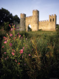 Wild Flowers in Front of Sham Castle at Dusk in Bath, England Photographic Print by Richard Nowitz
