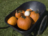 Wheelbarrow Full of Pumpkins Photographic Print by Stacy Gold
