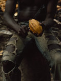 Shirtless, Sitting Man Splits a Cacao Pod with a Knife Fotografisk tryk af James L. Stanfield