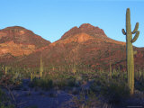 Sonoran Desert Scenic with Seguaro Cactus Photographic Print by George Grall