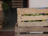 Wood Crate of Fruit, San Cristobal de Las Casas, Mexico Photographic Print by Gina Martin