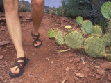 Woman Hiking Past a Prickly Pear Cactus, Wearing Sandles Photographic Print by Rich Reid