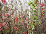 Springtime Buds and Blooms Among the Weeds on the Chesapeake Bay Photographic Print by David Evans