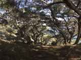 Trail Through Torrey Pine Tree Forest, California Photographic Print by James Forte