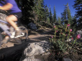 Woman Mountain Biking on the Flume Trail in Motion Photographic Print by Rich Reid