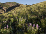 Sunrise and Spring Wildflowers, Colorado Photographic Print by Michael S. Lewis