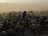 Semi-Underexposed View of an Arab Inn the Middle of a Flock of Sheep Photographie par James L. Stanfield