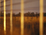 View Through a Dingo Control Fence Protecting Endangered Wombats, Australia Photographic Print by Jason Edwards