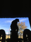 Silhouette of a Man on his Tractor Coming Through Barn Doors Photographic Print by Kate Thompson