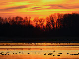 Scene at Bombay Hook National Wildlife Refuge, Delaware Photographic Print by George Grall