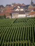 Vineyards in the Champagne Region, France Fotografisk tryk af Michael S. Lewis