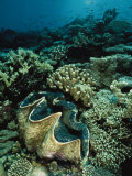 Underwater Vista of a Reef Off Bikini Atoll Reveals a Giant Clam and Various Corals Photographic Print by Bill Curtsinger