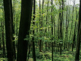 Scenic View of a Forest, Virginia Fotografisk tryk af Kenneth Garrett