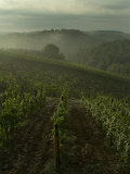 Vineyards Along the Chianti Hillside Through the Fog, Tuscany, Italy Fotografisk tryk af Todd Gipstein