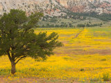 Wildflowers Along Hwy 96, New Mexico Photographic Print by Michael S. Lewis
