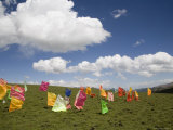 Tibetan Prayer Flags in a Field, Qinghai, China Fotografisk tryk af David Evans