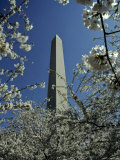 Washington Monument Seen Through Cherry Blossom Trees, Washington, D.C. Photographic Print by Kenneth Garrett