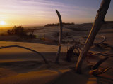 Twilight View of Driftwood in the Dunes, Oregon Photographic Print by Phil Schermeister