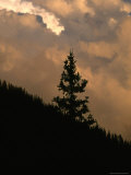 Silhouette of a Fur Tree on a Mountain Side with a Dramatic Sky Photographic Print by Kate Thompson