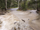Water Flowing in the North Fork Matilija Creek after the Rains Photographic Print by Rich Reid