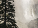 Upper Yosemite Falls and Pine Tree in the Winter, California Photographic Print by Rich Reid