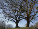 Two Trees Grow Side by Side in Rural Tennessee Photographic Print by Joel Sartore