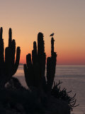 Sunrise on San Esteban Island, Baja California, Mexico Photographic Print by Ralph Lee Hopkins