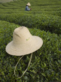 Straw Hat Rests on Tea Bush in Front of Tea Gatherer in Rural China Photographic Print by David Evans