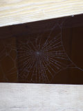 Spider Web in Wood Beams, California Photographic Print by James Forte