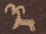 Wolfe Ranch Ute Petroglyph Panel of Bighorn Sheep, Utah Fotografisk tryk af Rich Reid