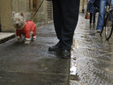 White Dog in the Street, Florence, Italy Photographic Print by  Brimberg & Coulson