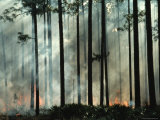 Tree Trunks Wreathed in Smoke from a Forest Fire Photographic Print by Melissa Farlow