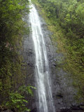 The Manoa Falls Waterfall in Honolulu, Hawaii Photographic Print by Stacy Gold