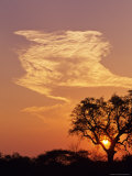 Sunset Through a Silhoetted Acacia Tree, South Africa Photographic Print by Ralph Lee Hopkins