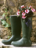 Still Life with Rubber Boots and New Guinea Hybrids Photographic Print by Roland Krieg