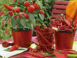 Peppers and Chili Peppers in Red Enamel Buckets Photographic Print by Friedrich Strauss