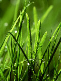Blades of Grass with Dewdrops Photographic Print by Dirk Olaf Wexel