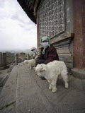 Women and Lambs at the Temple of the Sun and Moon, Qinghai, China Photographic Print by David Evans