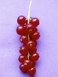 Bunch of Redcurrants Photographic Print by Marc O. Finley