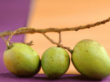Three Green Mangos on a Branch Photographic Print by Luzia Ellert