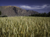 Wheat Field and Mountains, Qinghai, China Photographic Print by David Evans