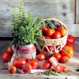 Still Life with Tomatoes and Flowering Basil in a Vase Lámina fotográfica