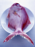 Red Snapper on a Plate Photographic Print by Marc O. Finley